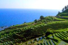 """白米の千枚田 2011年6月、日本初の""""世界農業遺産""""に≪能登≫が登録されました。"""