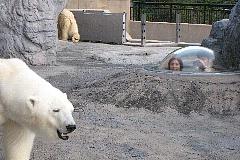 旭山動物園 自然な生態がみられる行動展示を実施。まじかにに見られる自然体の動物たちに大人もほっこり