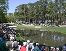 "Augusta National Golf Club 16th Hole 170Y P3 ""RED BUD"""